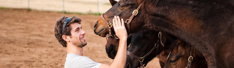 guyhorses